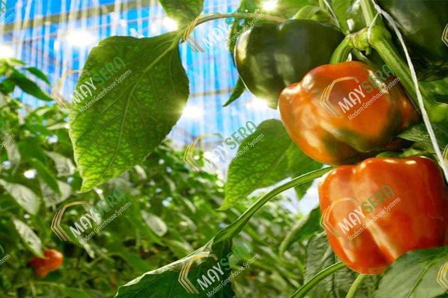 Topraklı biber sera kurulumu | MAYSERA