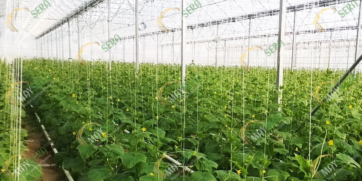 Topraklı Salatalık Serası | MAYSERA