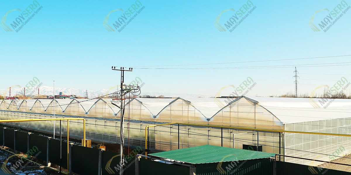Özbekistan topraklı domates Serası