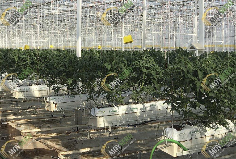 Topraksız domates serası Gutter sistemi | MAYSERA