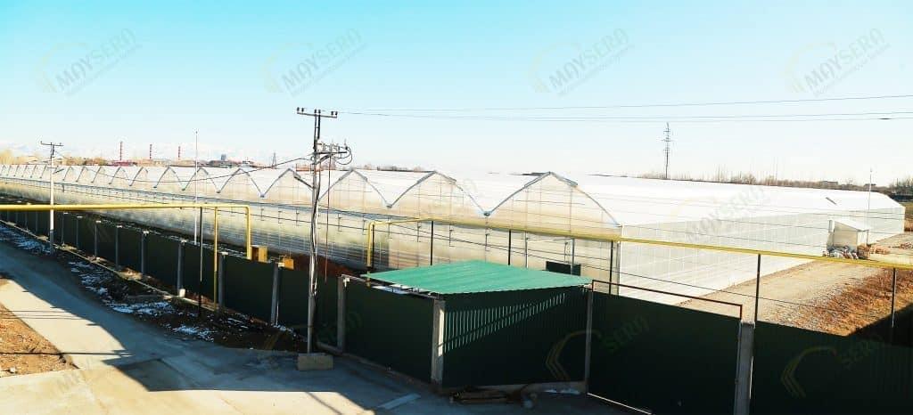 Özbekistan topraklı domates serası | MAYSERA